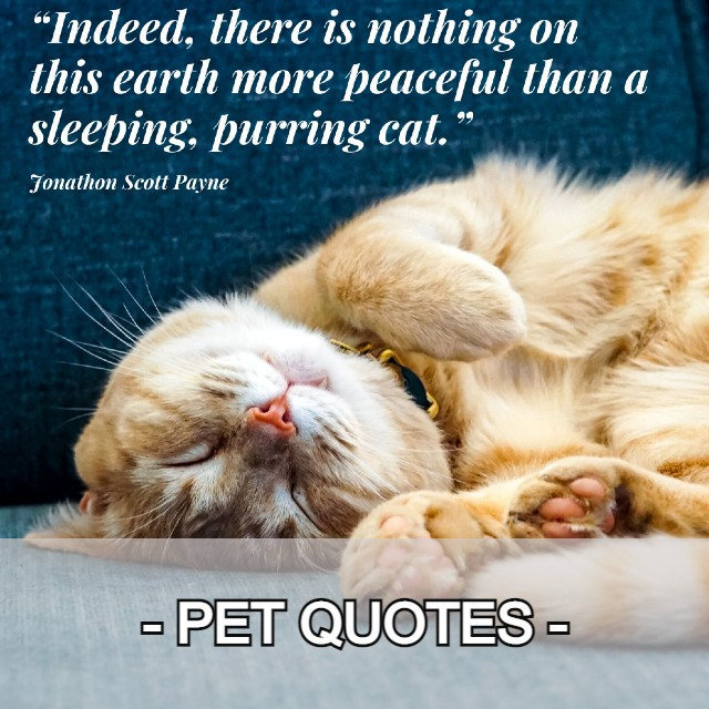 PET QUOTES CATEGORY