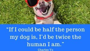 pet quotes with images no 4